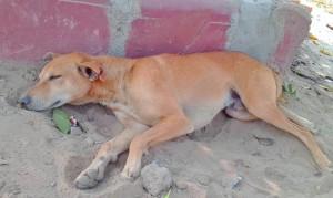 Sheru in a slumber